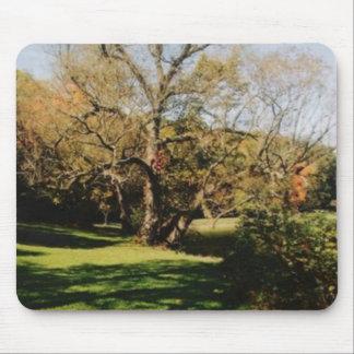 A BIG TREE MOUSE PAD