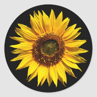A Big Yellow Sunflower Classic Round Sticker