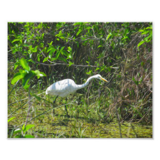 A Bird in Motion Photographic Print