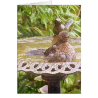 A Bird In The Bath Card