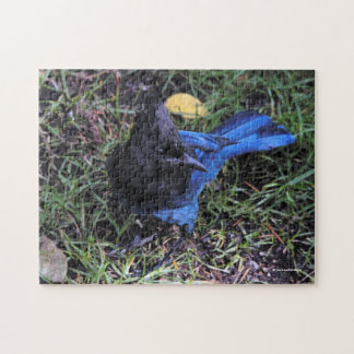 A Bird's Eye View of a Steller's Jay on the Lawn Jigsaw Puzzle