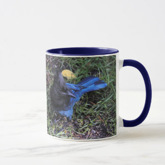 A Bird's Eye View of a Steller's Jay on the Lawn Mug