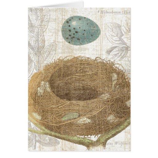 A Bird's Nest with a Decorative Egg Card