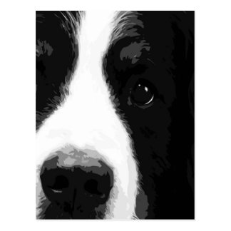 A black and white Bernese mountain dog Postcard