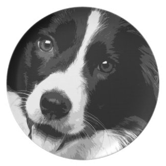 A black and white Border collie Plate