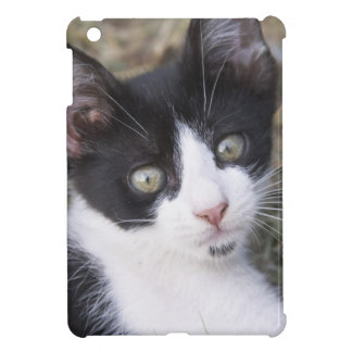 A black and white cat kitten in the garden. cover for the iPad mini