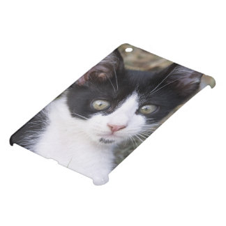A black and white cat kitten in the garden. iPad mini covers
