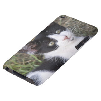 A black and white cat kitten in the garden. iPod touch covers