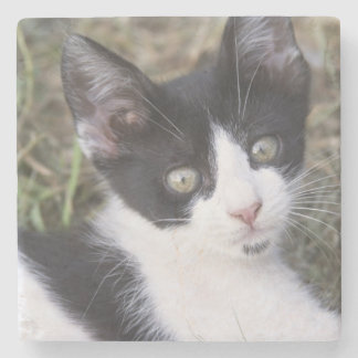 A black and white cat kitten in the garden. stone coaster