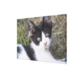 A black and white cat kitten in the garden. stretched canvas prints