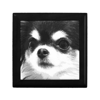 A black and white Chihuahua Gift Box