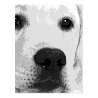 A black and white Labrador retriever Postcard