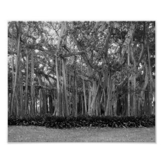 A Black And White Photograph Of Banyan Trees Poster