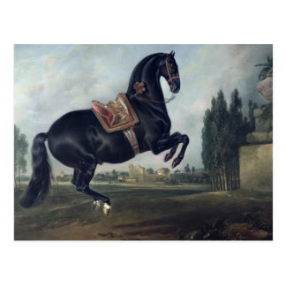 A black horse performing the Courbette Postcard