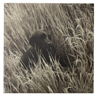 A black puppy in a meadow. tile