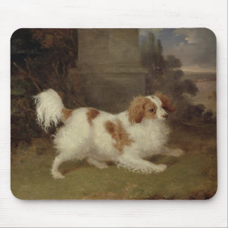A Blenheim Spaniel, c.1820-30 (oil on canvas) Mouse Pad