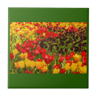 a blossoming of tulips in a park on ceramic tile