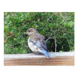 A Blue Bird Postcard