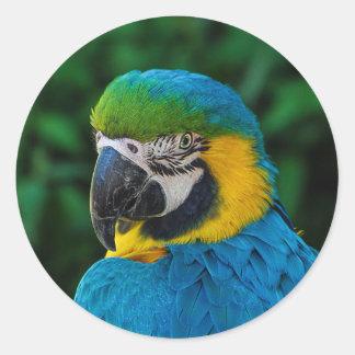 A Blue Parrot Classic Round Sticker