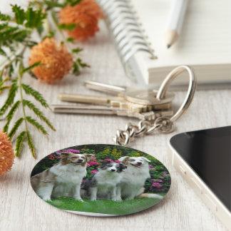 a border collie, Bluem alder, and two Australia Key Ring
