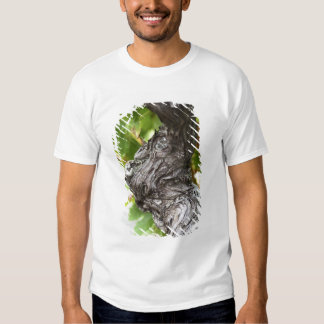 A branch of a very old vine with gnarled shirt