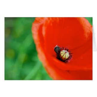 A Bright Red Poppy Card