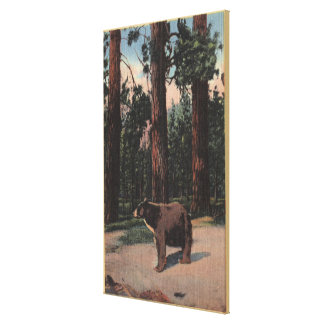 A Brown Bear in the Woods Gallery Wrap Canvas