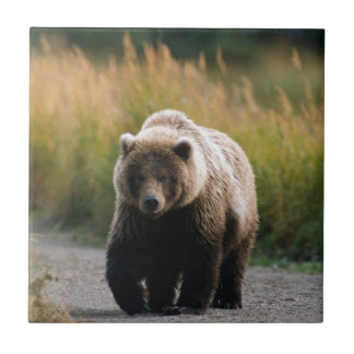 A Brown Bear Walking on a Trail Small Square Tile