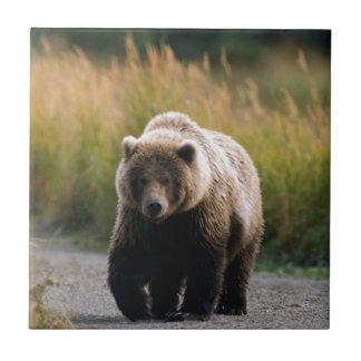 A Brown Bear Walking on a Trail Tile