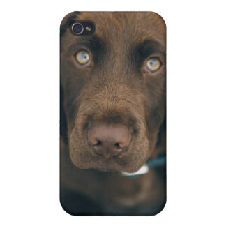 A brown dog. case for iPhone 4