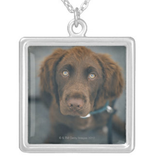 A brown dog. necklaces