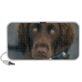 A brown dog. mini speakers