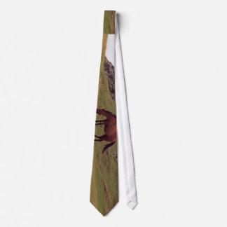 A brown horse eats grass tie
