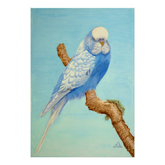 A Budgie perched on a branch Poster