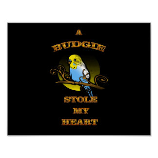 A Budgie Stole My Heart Poster