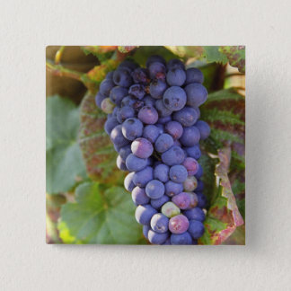 A bunch of Pinot Noir grapes in a Chambertin 15 Cm Square Badge