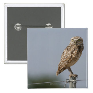 A burrowing owl sitting on a fence post Taken Pinback Buttons