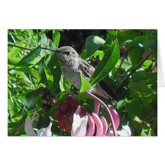 a calming photographic card of a hummingbird