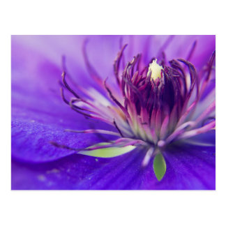A Calyx of Blue Floral Photography Fine Art Nature Postcard