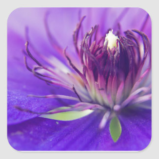 A Calyx of Blue Floral Photography Fine Art Nature Square Sticker