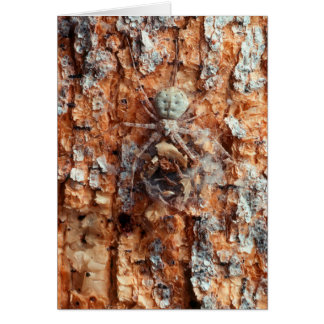 A Camouflaged Bark Spider Card