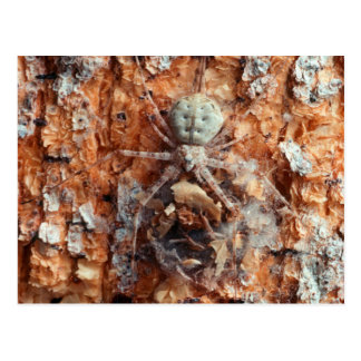 A Camouflaged Bark Spider Postcard