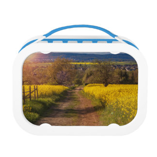 A canola field in spring lunchboxes