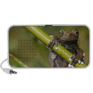A captive Tapichalaca Tree Frog Hyloscirtus Laptop Speakers