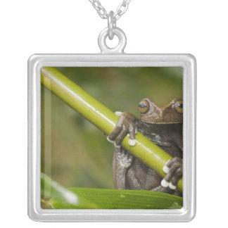 A captive Tapichalaca Tree Frog Hyloscirtus Square Pendant Necklace