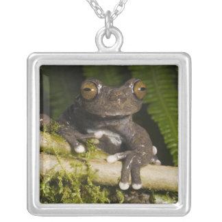 A captive Tapichalaca Tree Frog (Hyloscirtus Square Pendant Necklace