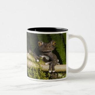 A captive Tapichalaca Tree Frog (Hyloscirtus Two-Tone Mug