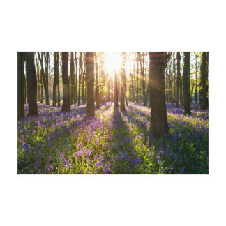 A Carpet of Spring Bluebells in the Woods Canvas Print