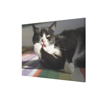 A Cat Licking It's Paw Stretched Canvas Prints