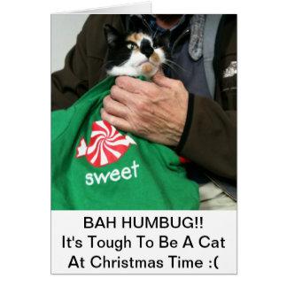 A Cat Lovers Christmas Card!!! Card